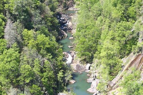 cliff tree nature water creek georgia stream tallulahgorge trrees