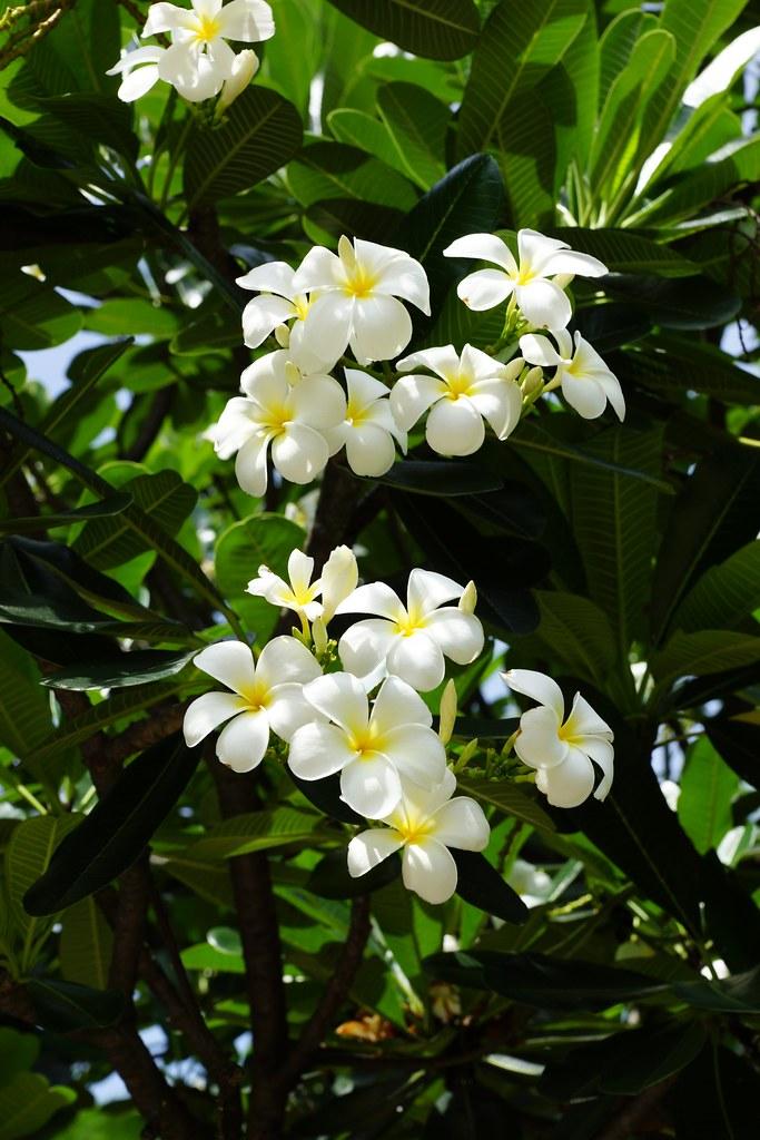 Flowers in Benjakiti Park, Bangkok, Thailand