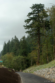 HCRH Trail - HCRH Trail Dedication Guided Tour - Site 9: Wolf Tree | by A. F. Litt