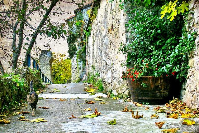 Un angolino nascosto della mia città ...A hidden corner of my city...