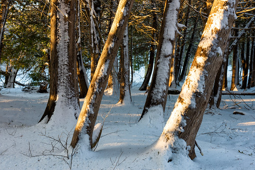tottenham conservation area ontario canada trees forest winters snow landscape nature newtecumseth ca