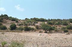 Ras el Bassit - Pot fields