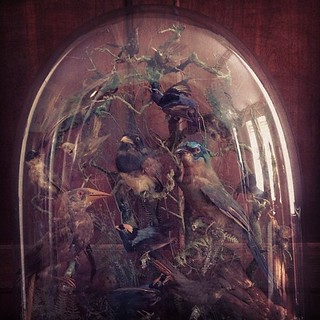 #Victorian #Birds #Preserved in a bubble