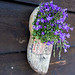 Wooden Shoe and Flowers