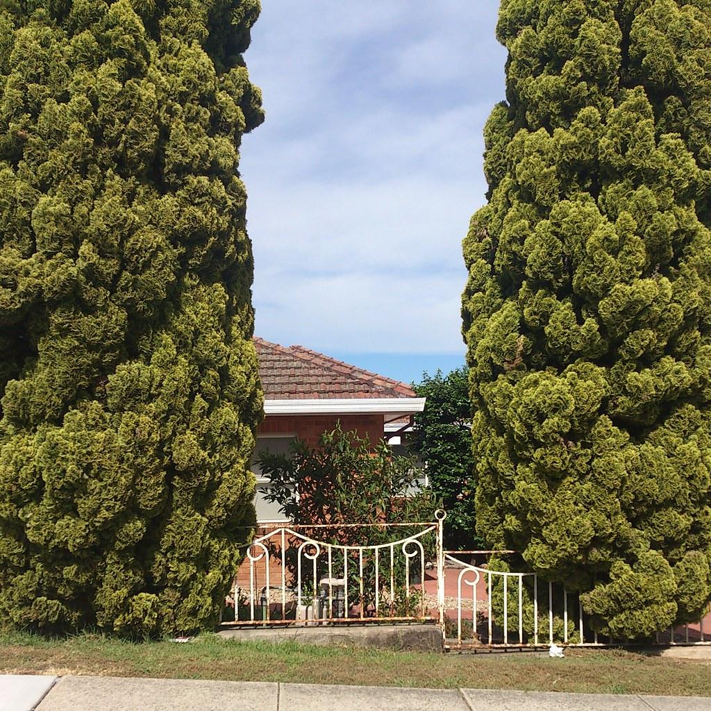 Pair - Penshurst, NSW.