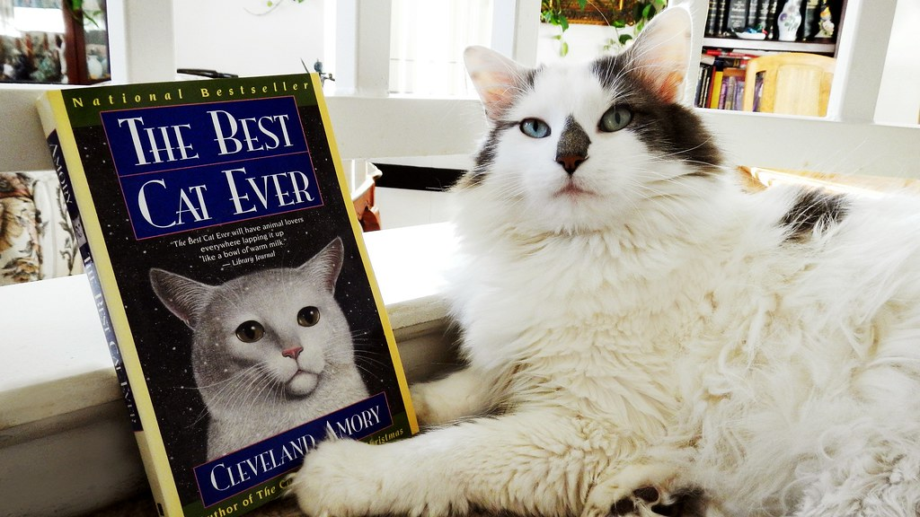Stevie Seems to Think the Book is about Him........Silly Boy