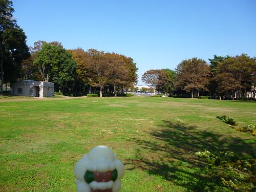 Whimsicott in Tsukuba, Ibaraki 2 (Tsukuba central park)   by Kasadera