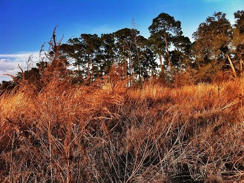 trees sunset nature landscape outdoors grassland