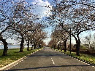 Hains Point Heaven | by Joe in DC