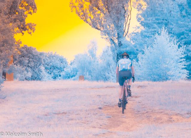 I/R Forest Cyclist