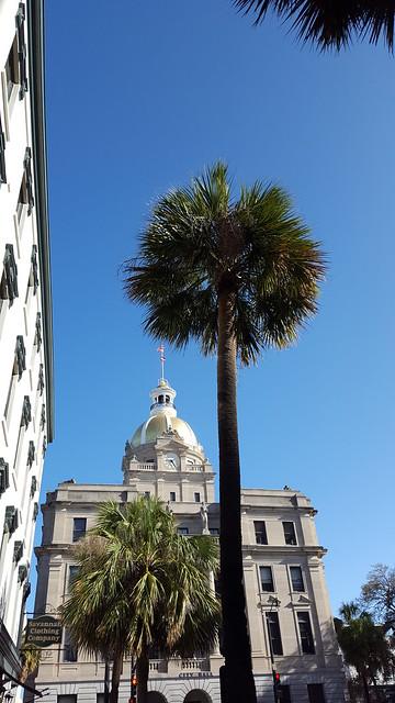 Savannah Palm