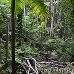 05 Viajefilos en Australia, Fraser Island 005