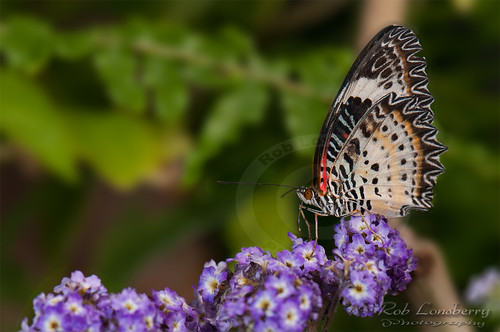 Toronto zoo butterfly | by Rob Lonsberry Photography