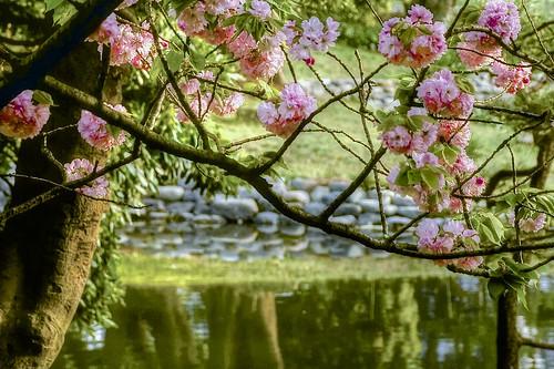 春 | by bjimmy934