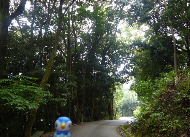 Piplup in Matsuyama, Ehime 6 (Matsuyama castle)