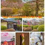 Hanezu Plum Garden of Zuishin-in temple in Kyoto.