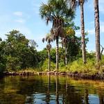 Pozo #carlina en San Juan de Manapiare en el Edo. Amazonas, una belleza rodeada de piedras y morichales con aguas muy calidas, casi termales, ideales para disfrutar un buen baño :wink: . . :point_right:#YoViajoConWakuTours #Viajes #viajesextremos #offroad