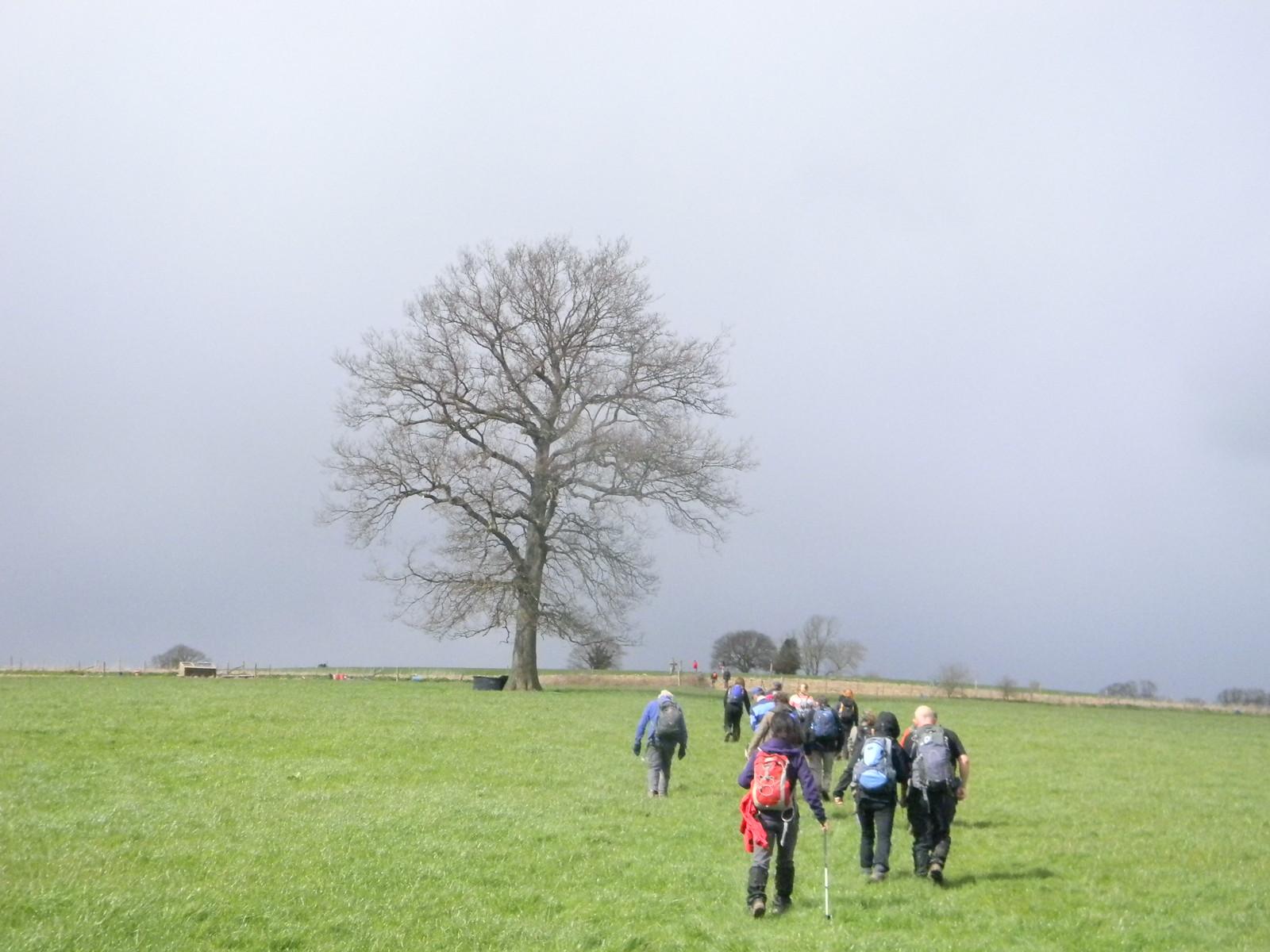 Prominent tree Etchingham to Wadhurst