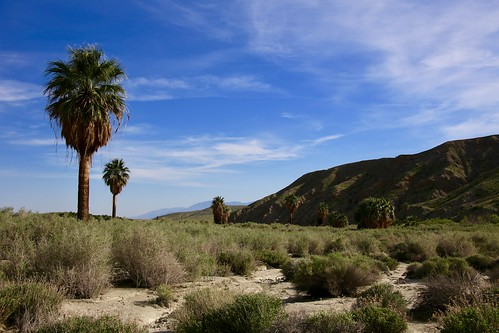 Thousand Palms Oasis, Coachella Valley, CA | by - Adam Reeder -