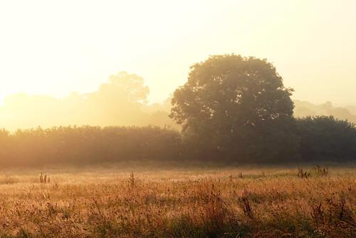 trees summer england sunrise landscape july bryan dorset sturminsternewton hazelburybryan