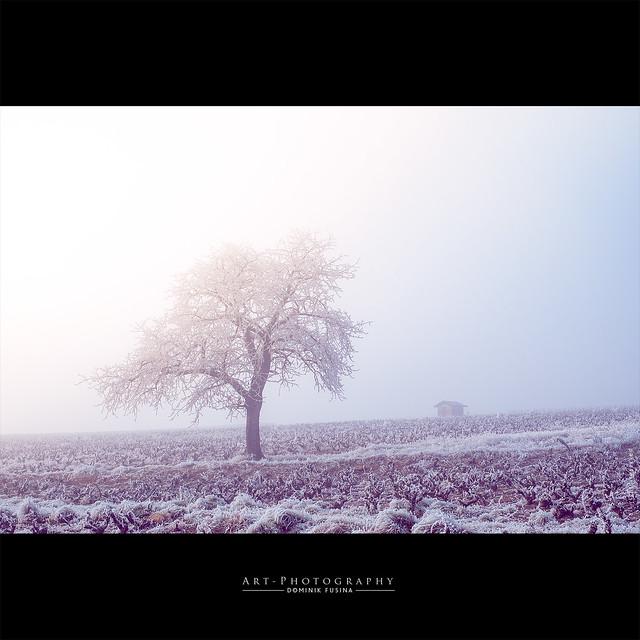 Vignes, Cadole & cerisier | FUJI x-PRO1
