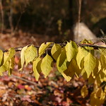 Leaves in a row