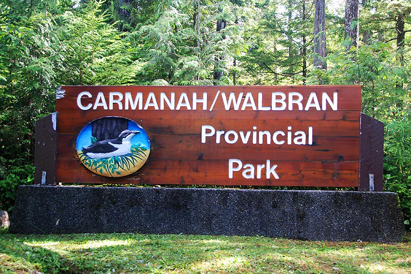 Carmanah Walbran Park provides dwindling Old-Growth nesting Habitat for the Marbled Murrelet in Carmanah Valley, Vancouver Island, British Columbia