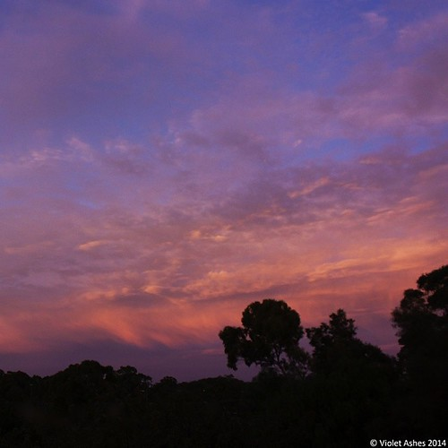 sunrise square squareformat southaustralia gawler iphoneography seeaustralia instagramapp uploaded:by=instagram foursquare:venue=4c59fbb76407d13a5ba1b328 instralia exploreaustralia
