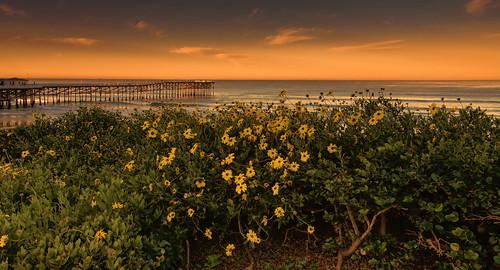 crystalpier pier pacificbeach pacificocean sandiego seaside coast ocean california sunrise