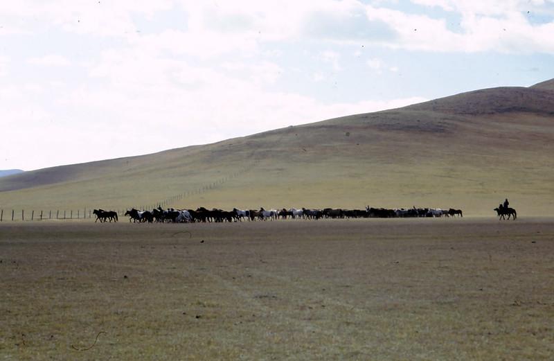 MONGOLIA-PAESAGGI-02-0025