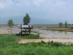 Reislandschaft am Weg nach Chiang Kong -Thailand