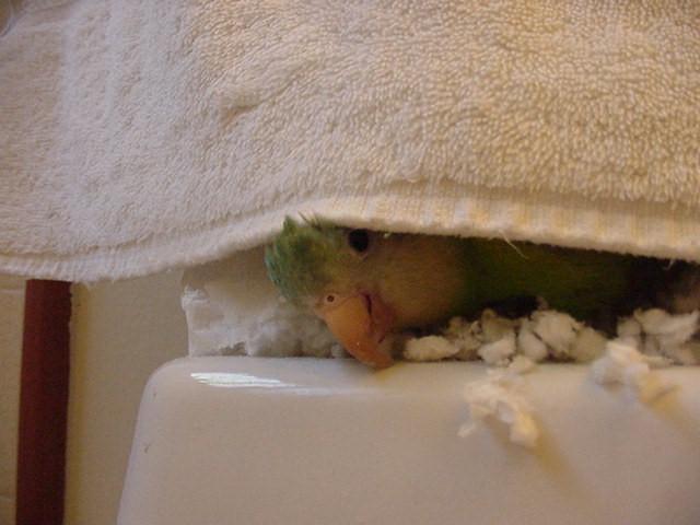 peeking from ft towel1 july 2004