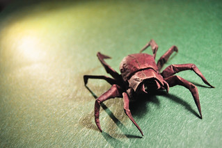 Origami Wolf Spider - Brian Chan | by Masamune81