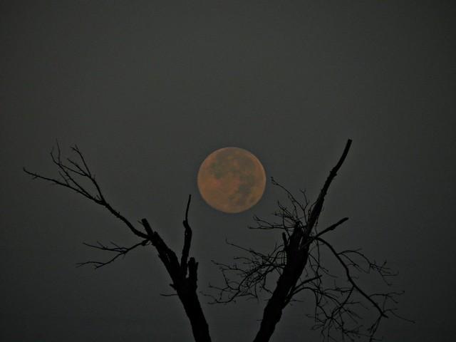 Moon in Dead Wood