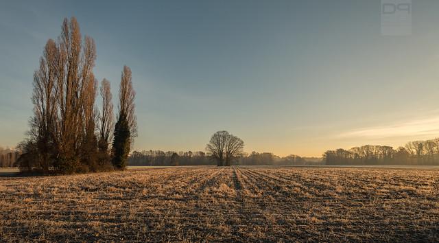 Freezing Morning [Explored]