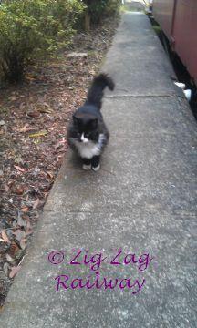 Rosie 2 by zigzagrailway