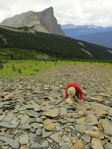 Burgess Shale Discovery Site with Mount Burgess | by Edna Winti
