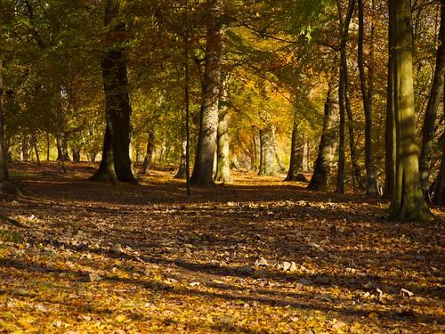 autumn trees sunlight leaves shadows virginiawater micro43 panasoniclumixg2 maggsmep