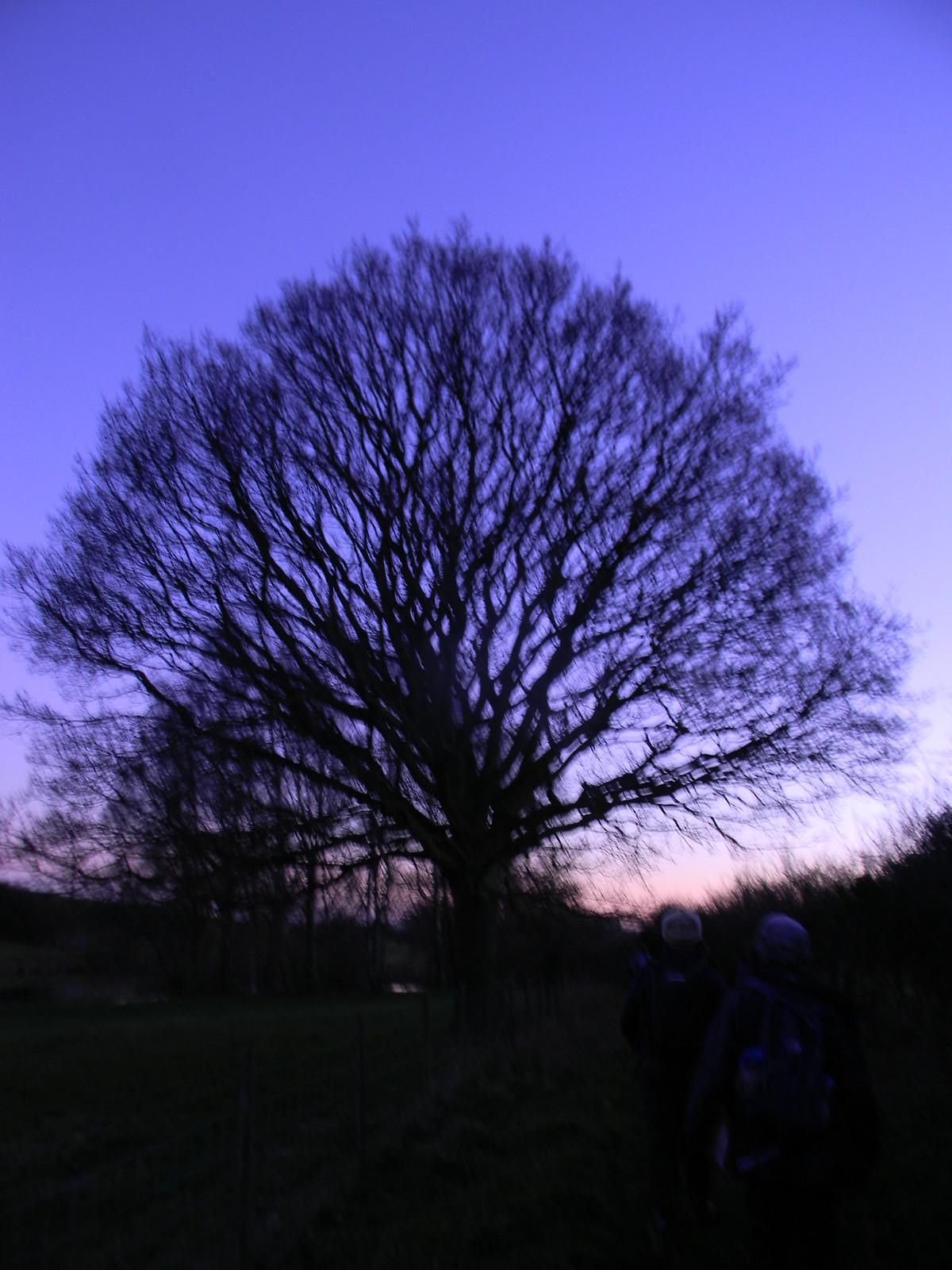 Tree at dusk 1 Appledore Short Circular