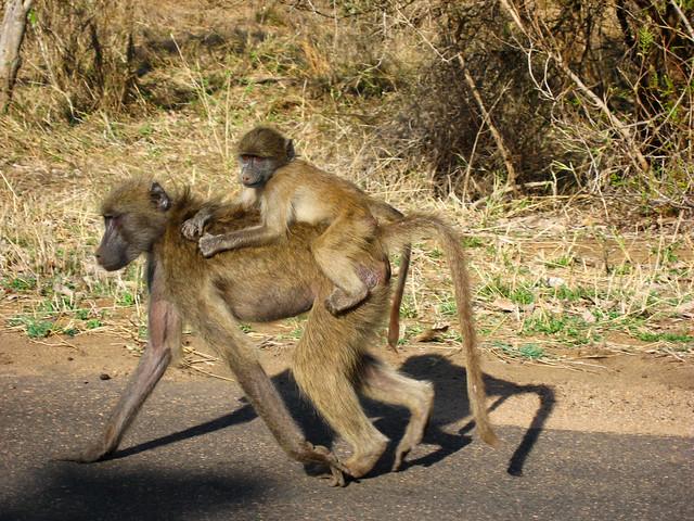 Transition to Madagascar069