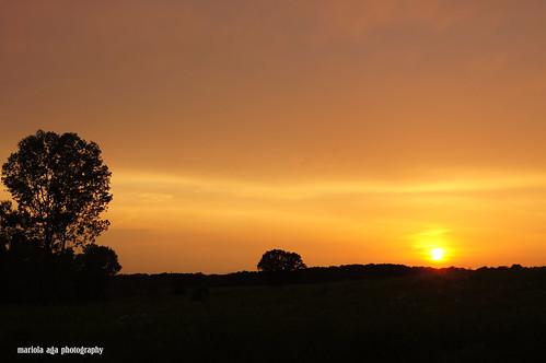 park trees sunset summer sky orange sun nature silhouette evening glow meadow thegalaxy