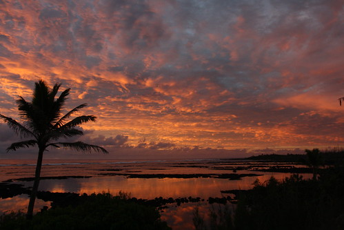 ocean pink sky orange sun silhouette sunrise landscape hawaii palm pools palmtree bigisland waiopaemarinepreserve coralpoolhouse