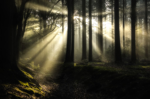 trees light holland netherlands standing forest perfect ray beam wald enchanted searching bizar bobvandenberg