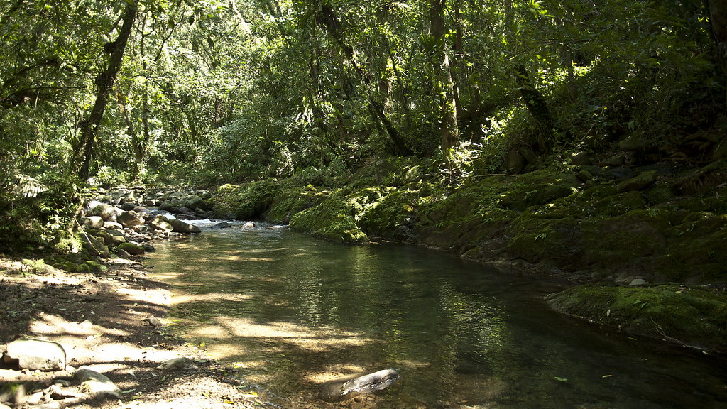 翡翠水庫周邊環境。圖片來源:林務局。