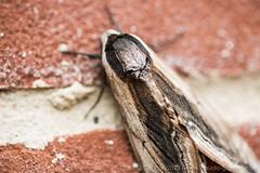 Claudia Gannon - moth