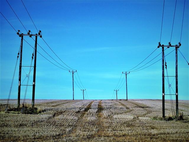 Telegraph Poles.