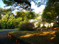 Garden we are living in
