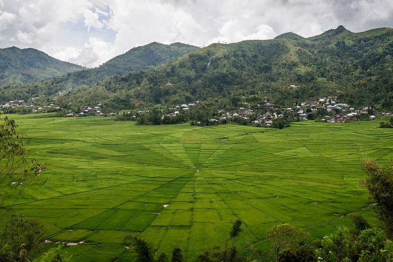 Spider Web Rice Fields