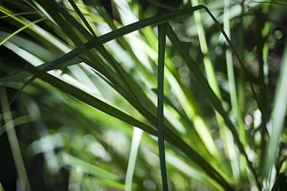 Abstract Green Grass Blades