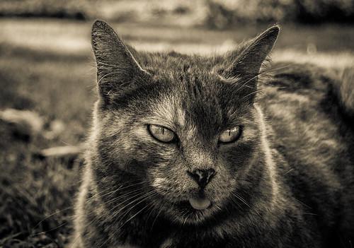 Cat | by Búho Fotografia